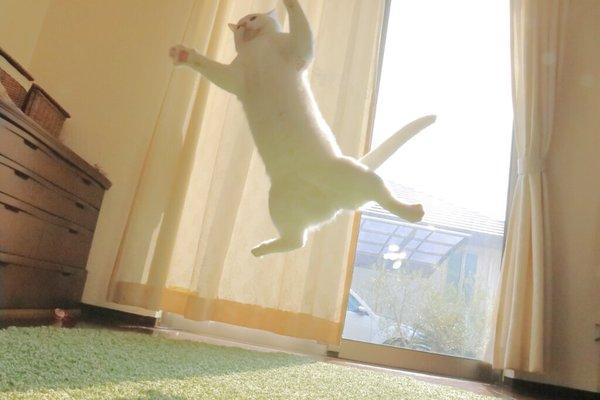 leap12