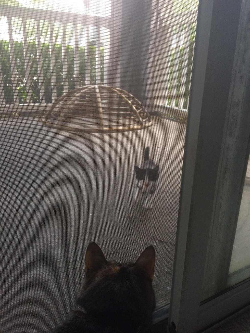 kw1 & Stray kitten shows up at door and demands to be adopted (Gallery)