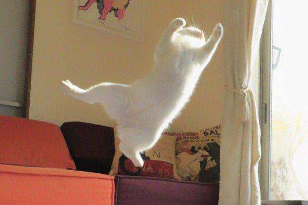 leap10