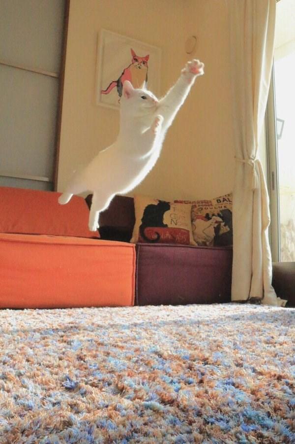 leap6