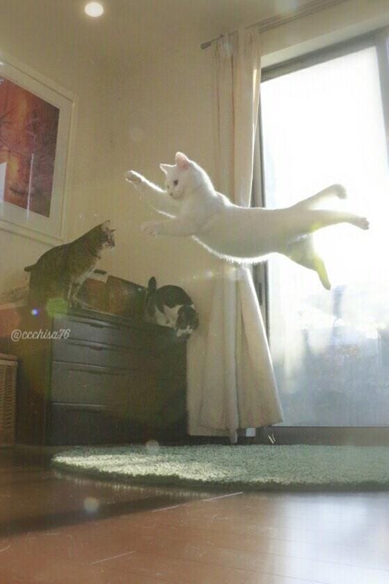 leap8