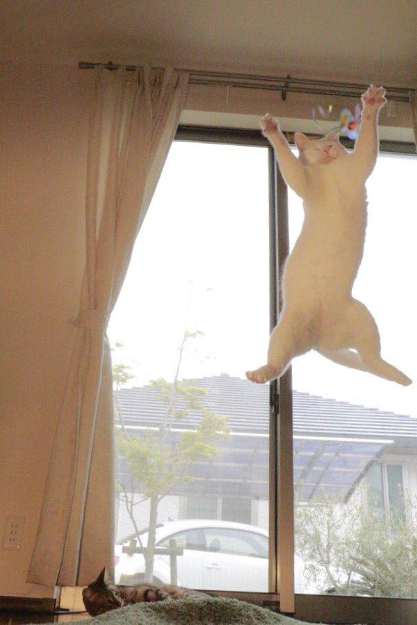 leap11