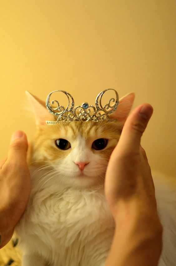 11 Cats In Crowns Wishing The Queen A Happy Birthday