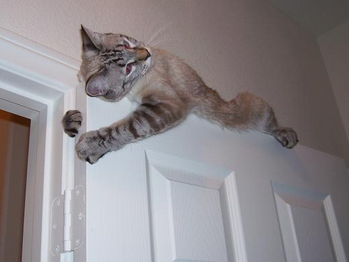 20 Cats On Doors That Prove Cats Are Our Little Acrobatic