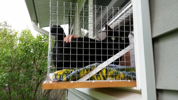 Cute Diy Catio That Your Cat Will Love Gallery