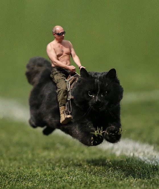 12 hilarious photoshopped pics of glorious cat who