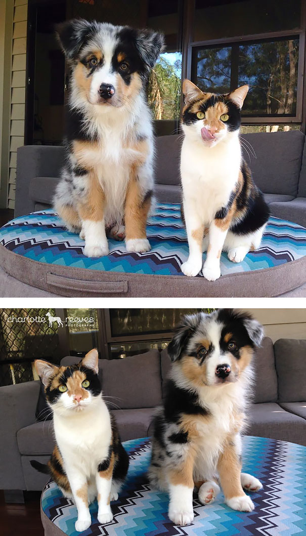 calico with matching dog