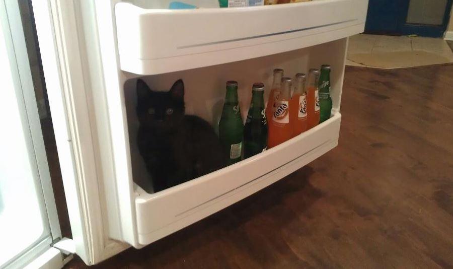 fridge30