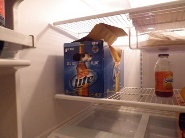 fridge14