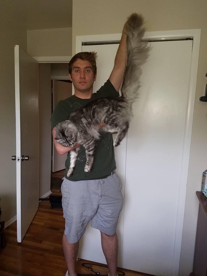 Genial I Iz Cat