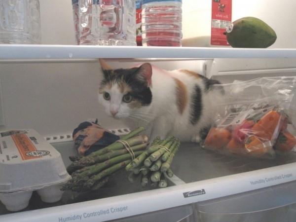 fridge19