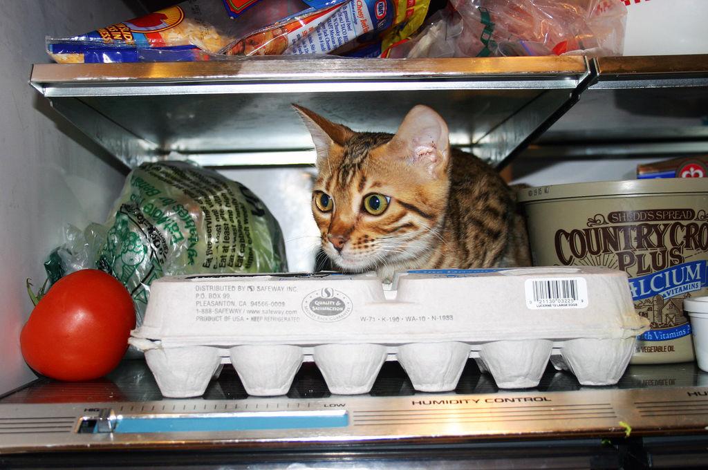 fridge27