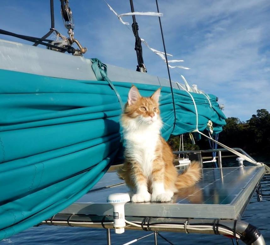 sail8