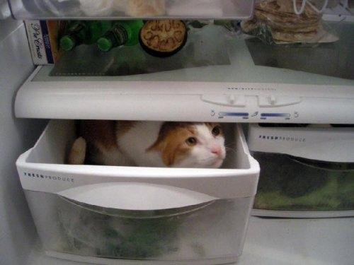 fridge23