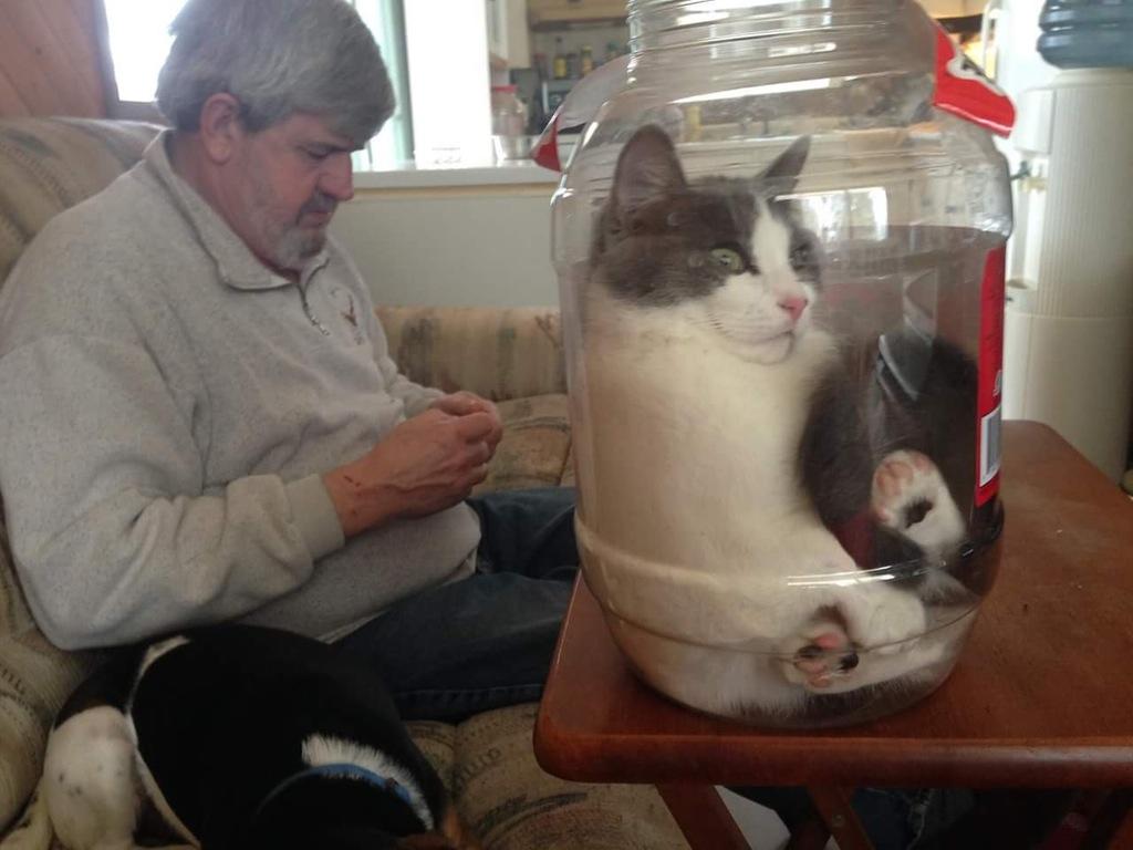 cat in jar