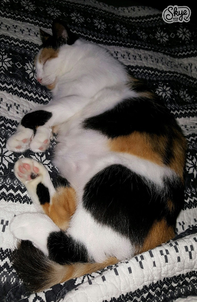 skye cuddling on her blanket