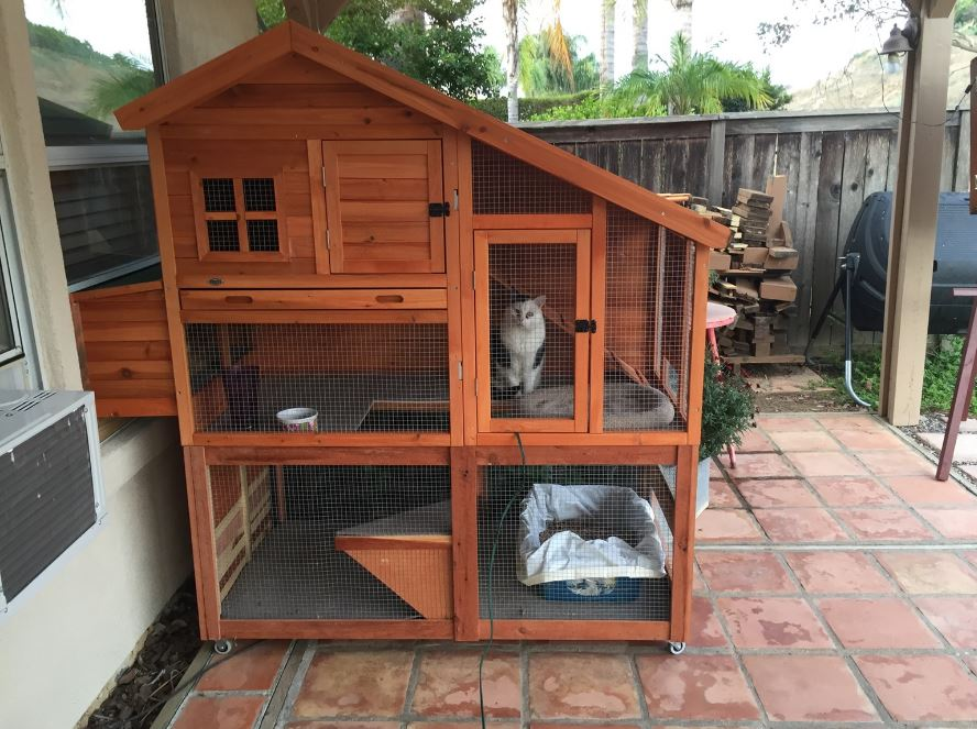She Bought A Chicken Coop For Her Cats And They Absolutely