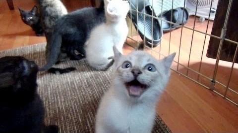 kittensqueak