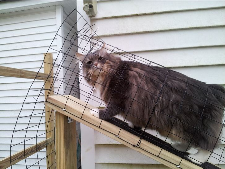 Couple Builds An Epic Catio For Their Two Cats Check