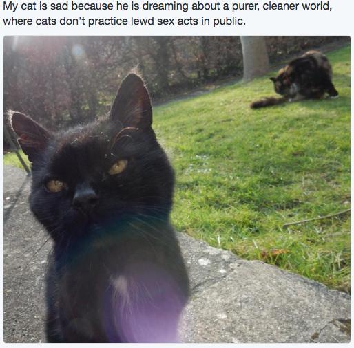sad cat 8