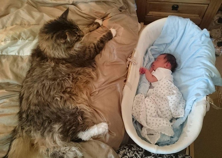 ludo the cat snuggling with baby brother