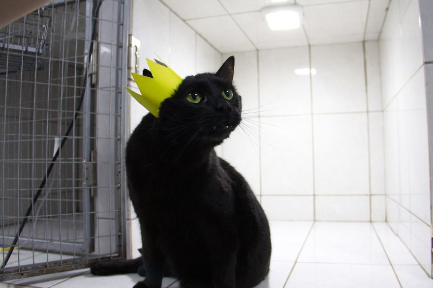 lyutsik the cat wearing a crown