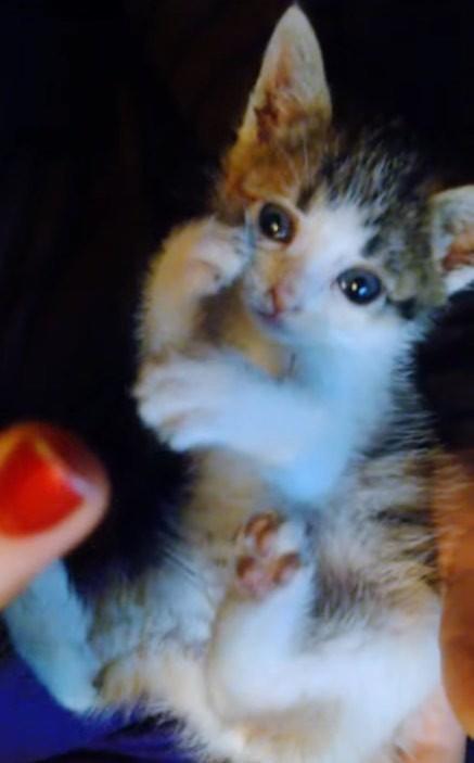 kitten happy in new home