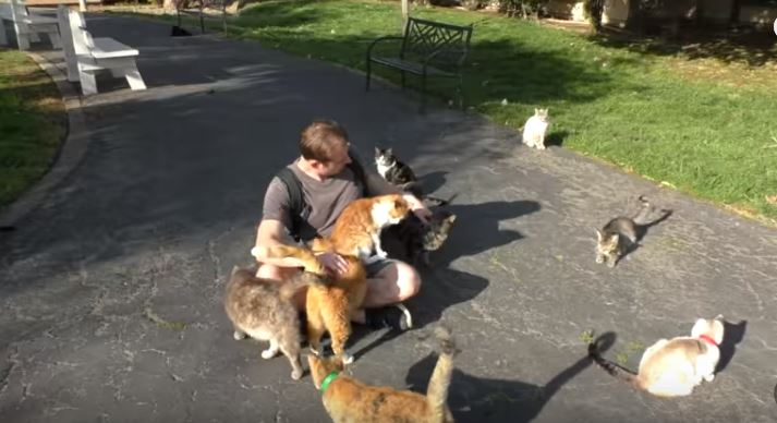 chris hanging out with some cats