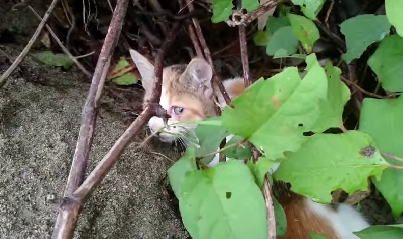 kitten hiding in bushes