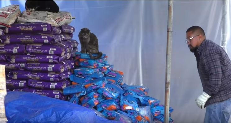 stack of dry cat food