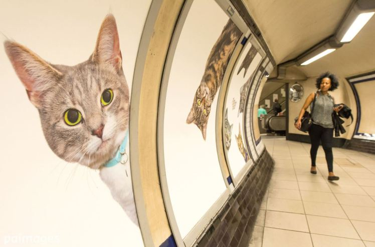 cat advert in london underground station