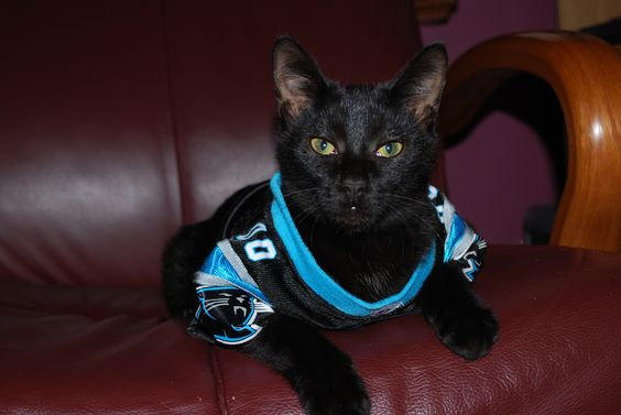 21 Cats Who Are Pumped For The Nfl Season
