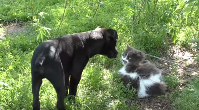cat and dog sniffing each other
