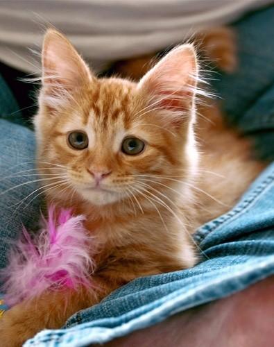 rupert the kitten