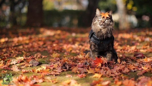 cat sitting in leaves