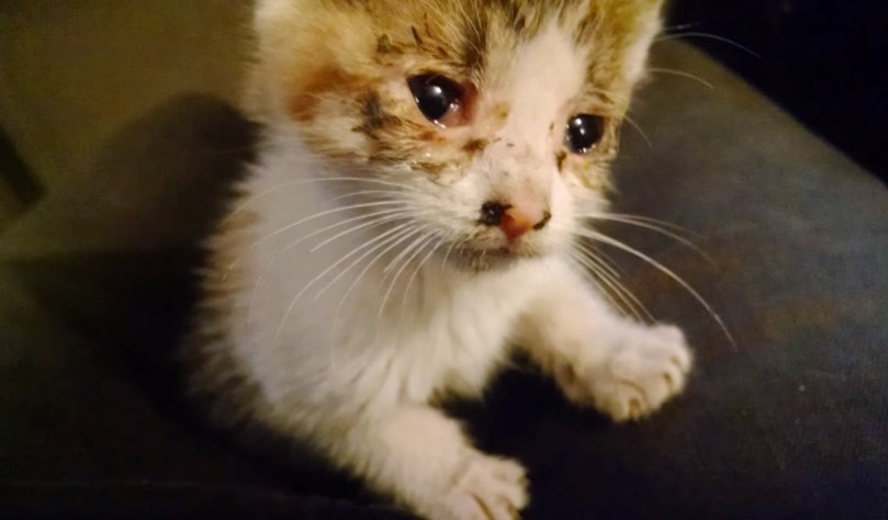 kitten rescued from traffic