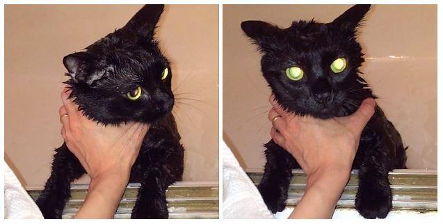 Salem getting a much needed bath