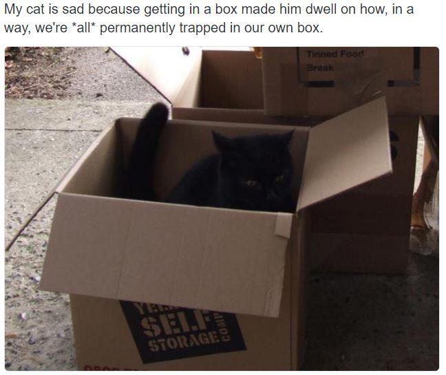 sad cat 11