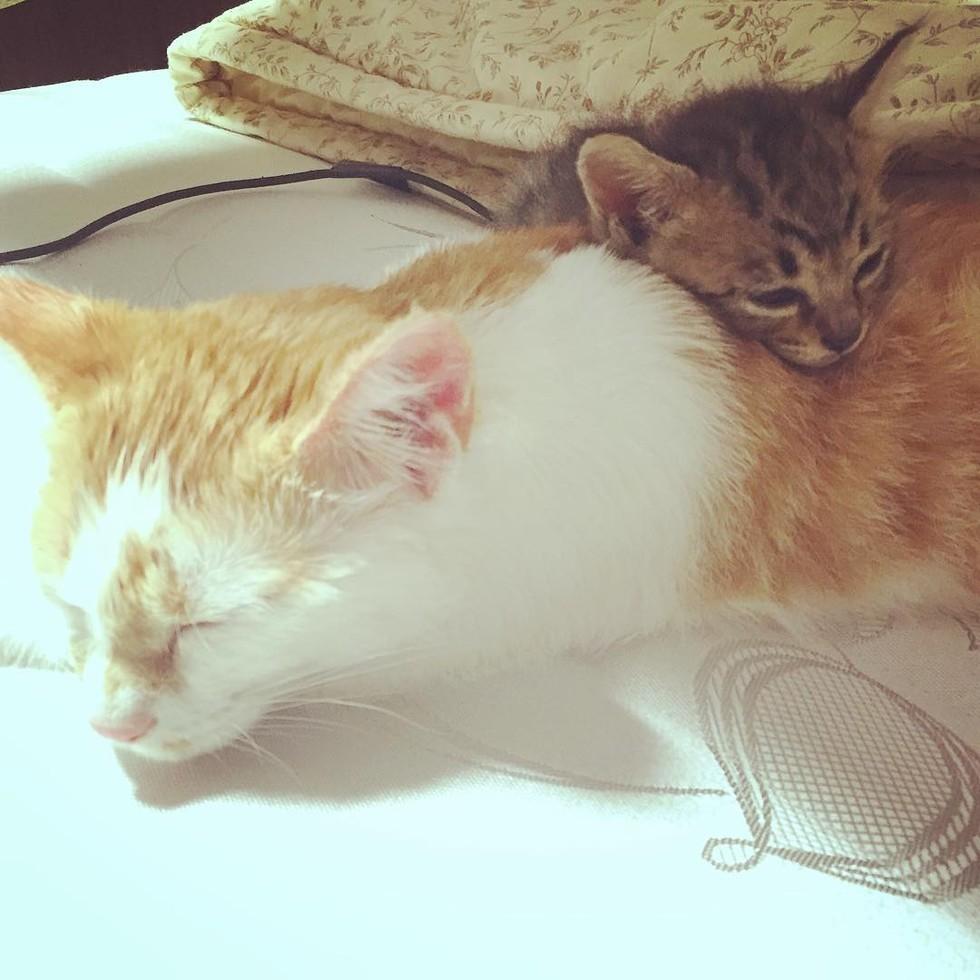 kitten and ginger sleeping