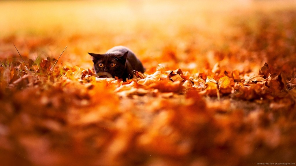 black cat in the leaves