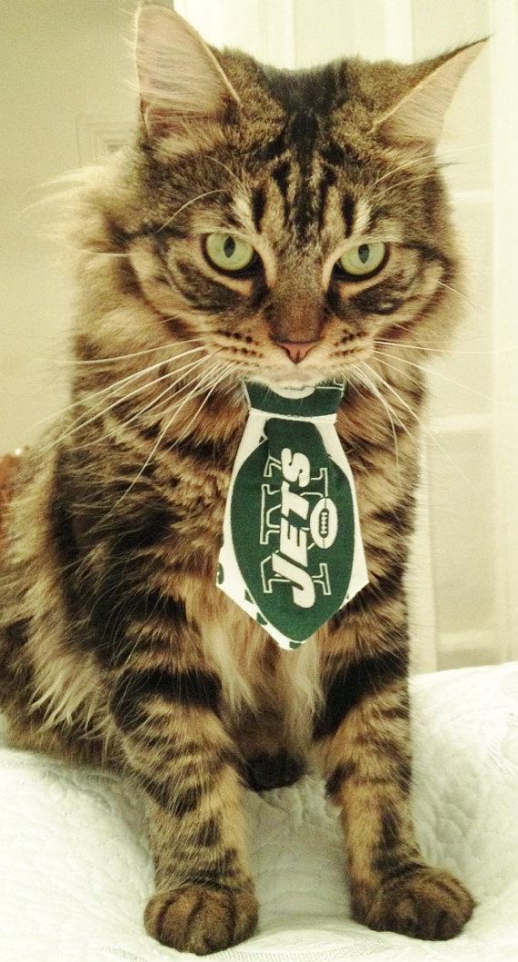 jets cat