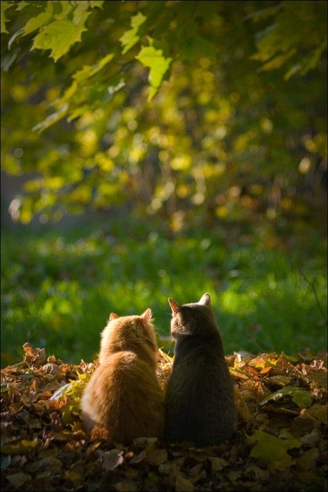 two cats in leaves
