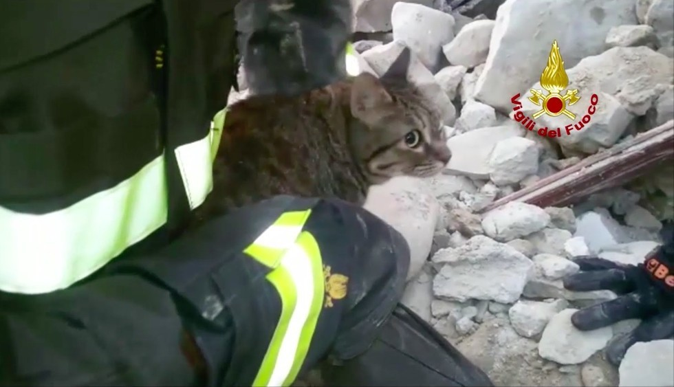cat cuddling with firefighters