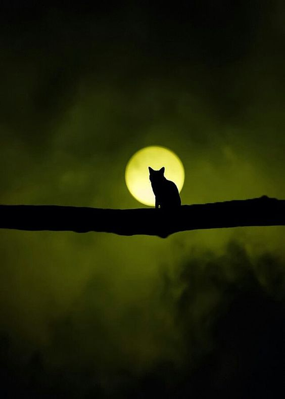 cat on branch with moon behind