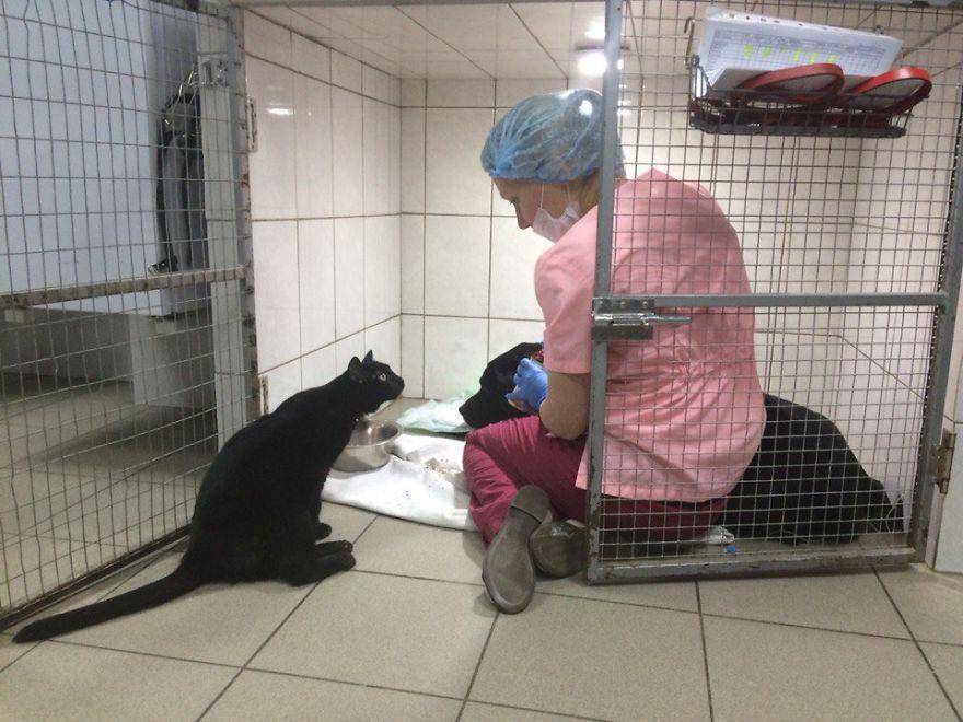 lyutsik the cat nurse