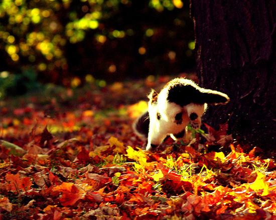cat diving in leaves