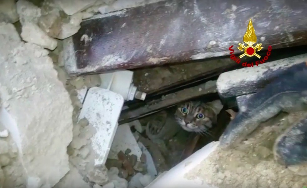 cat pokes his head out from rubble in Italy