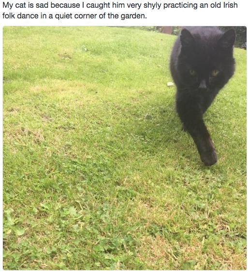 sad cat 4