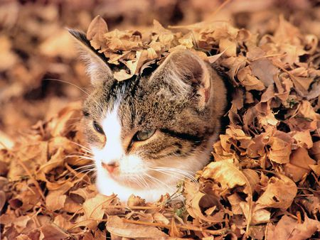 cat covered in leaves