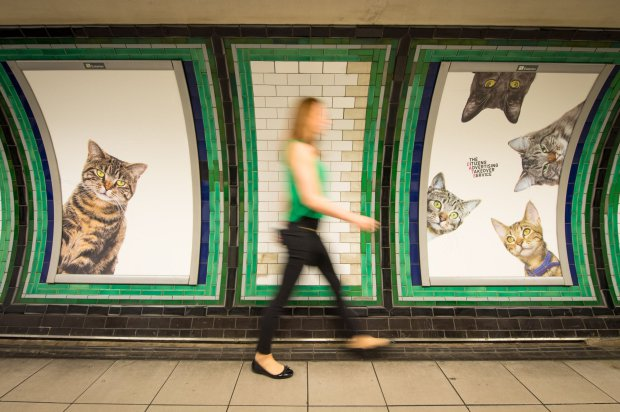cat adverts in london underground station